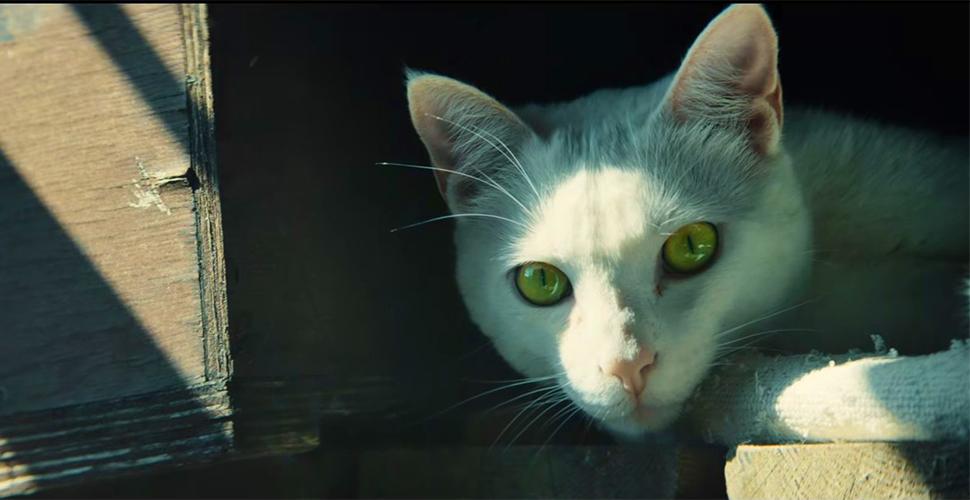 Ghost Recon Wildlands Katze