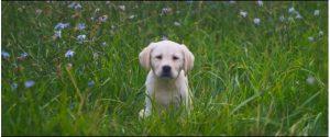 Destiny-2-Puppies