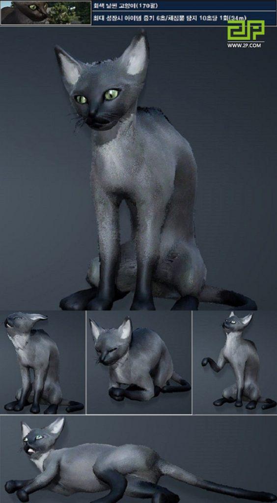 Black-Desert-graue-Katze