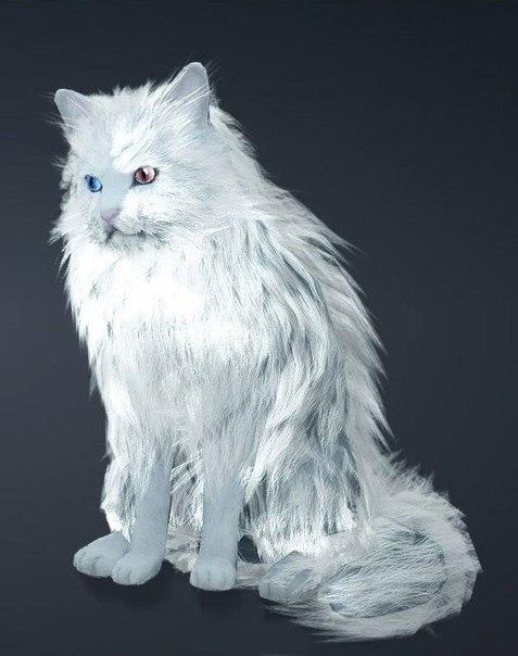 Black-Desert-weiße-Katze
