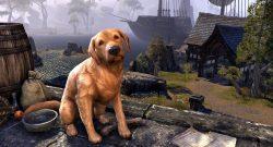 TESO-Apportierhund
