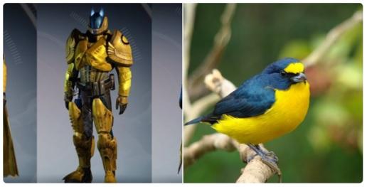 Destiny: Was haben Shader mit Vögeln gemeinsam? Einiges!