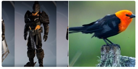 destiny-shader-vogel 1