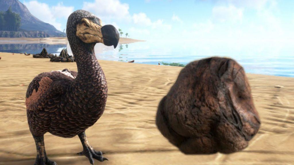 Ark dodo dung