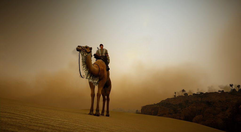 Black Desert Kamel