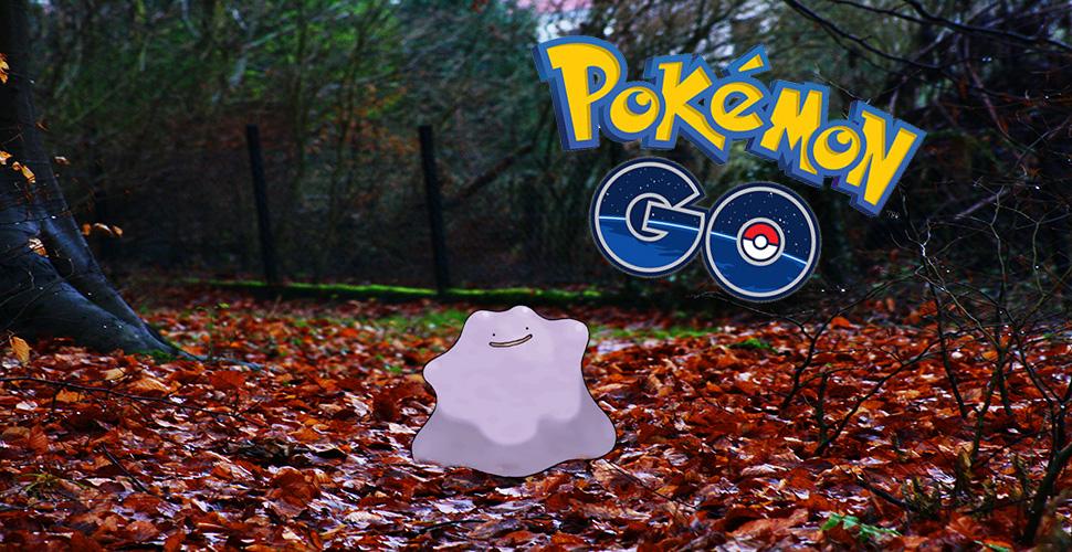 Pokemon DItto Wald Titel Banner