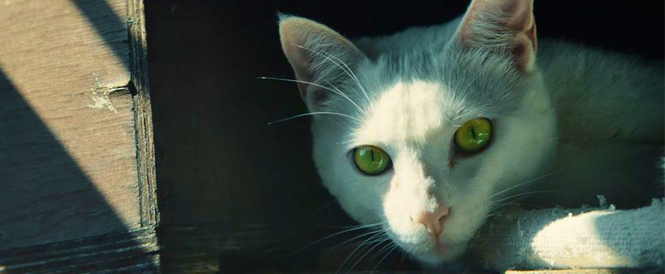 """Ghost Recon Wildlands: Neuer Live-Action-Trailer weiß """"Katzen lieben Laserpointer"""""""