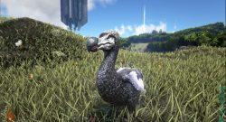 ark-dodo1