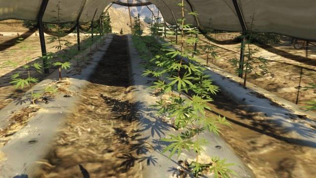 GTA 5 Online Weed