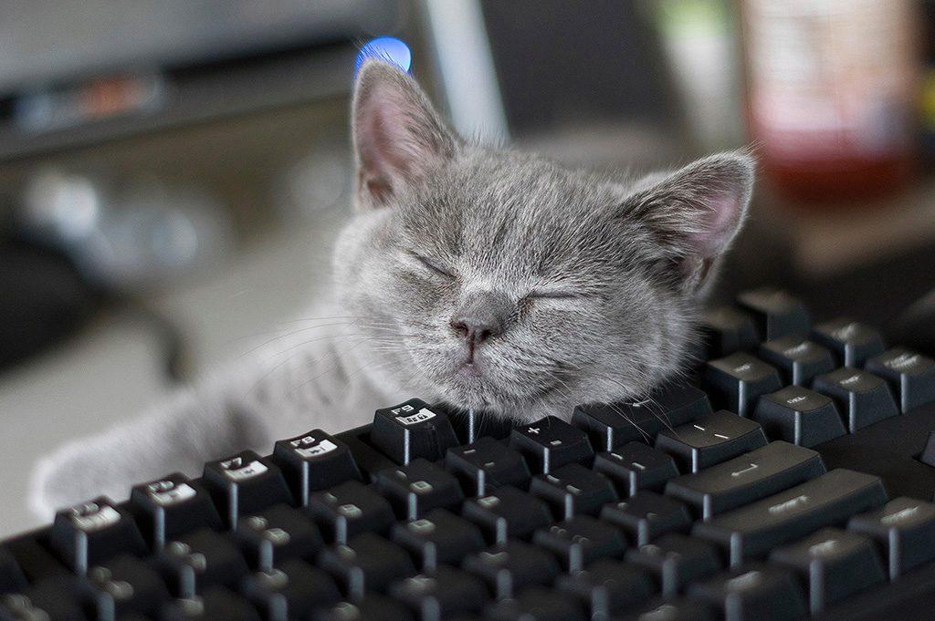 Blizzard Katze auf Tastatur