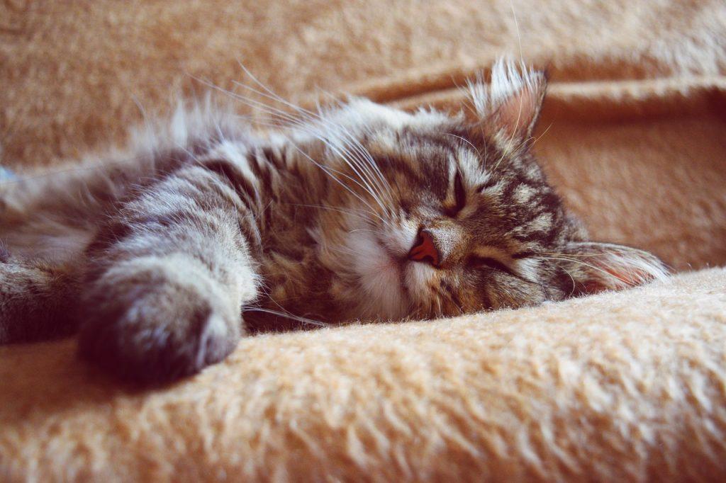 Schlafen Katze