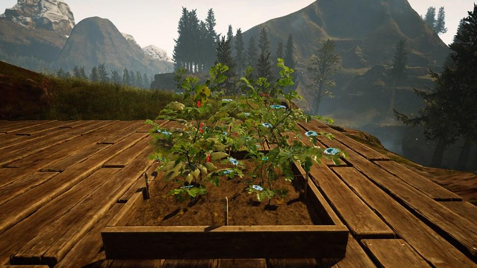 Citadel Pflanzen Beet