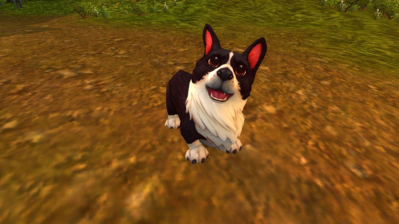 World of Warcraft WoW Sturmwind Botschaft Haustiere Hund