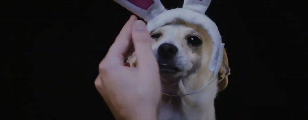 Cuteness Overload – Blizzard lässt Hunde als Overwatch-Helden antreten