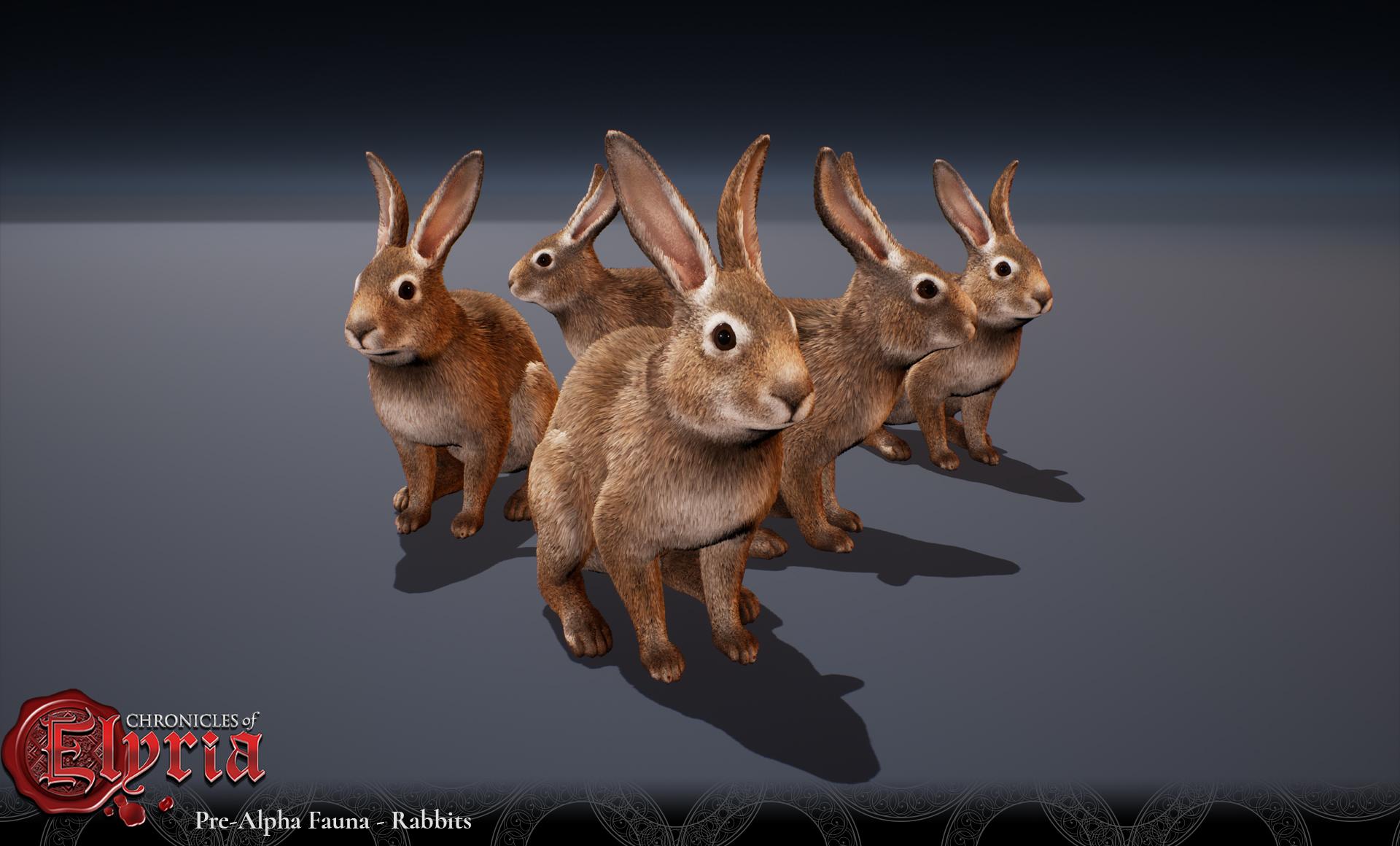 Bunnies-Elyria