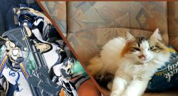 Warframe Kitty Titel