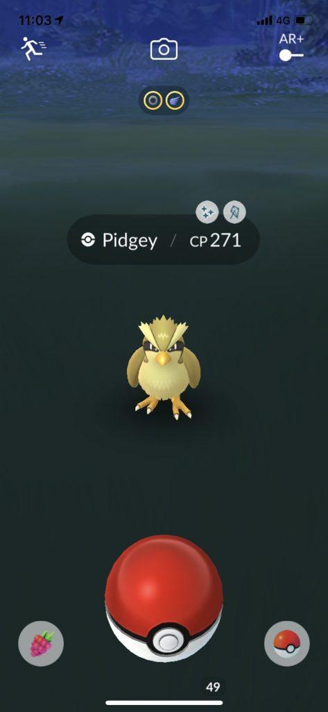 Shiny Taubsi Wildnis Pokemon GO