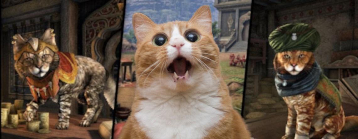 Im MMORPG ESO kaufen Spieler zügellos ein Katzen-Pet für 30€ – Aber Warum?