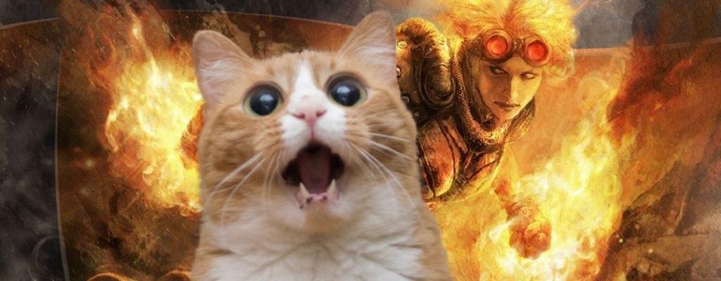 Klickt in Magic The Gathering: Arena bloß nicht auf die Katze