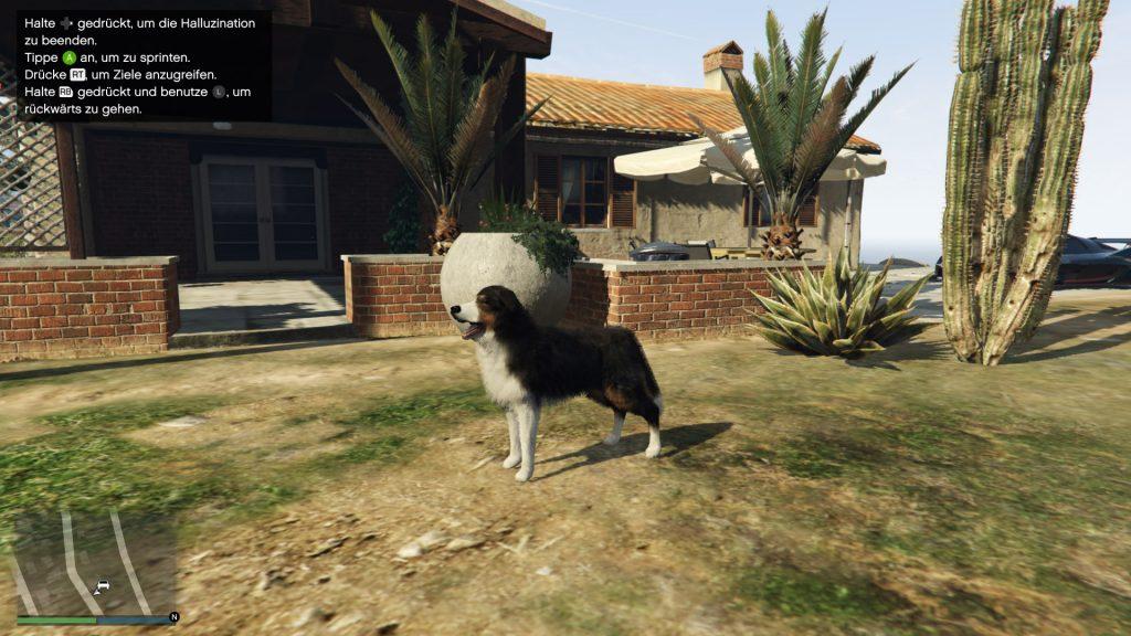 GTA Online Hunde Verwandlung