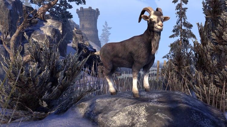 The Elder Scrolls Online: Ihr könnt die Lockboxes, über die Ihr Euch so aufgeregt habt, nun selbst testen