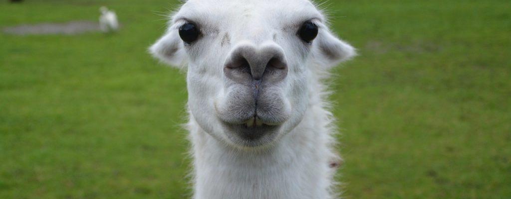 Fortnite PvE geht sein größtes Problem an: die verdammten Lamas