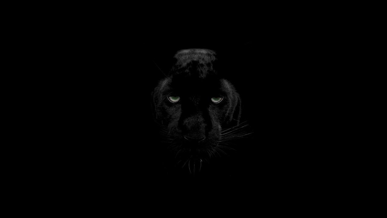 In Project Gorgon killen Panther die Wirtschaft des MMORPGs
