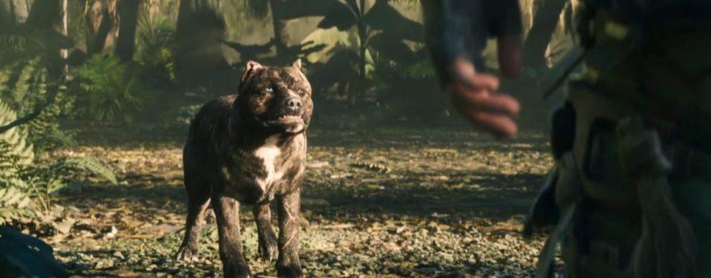 Black Ops 4: Platz, Bello – Spieler trickst nervigen Kampfhund aus