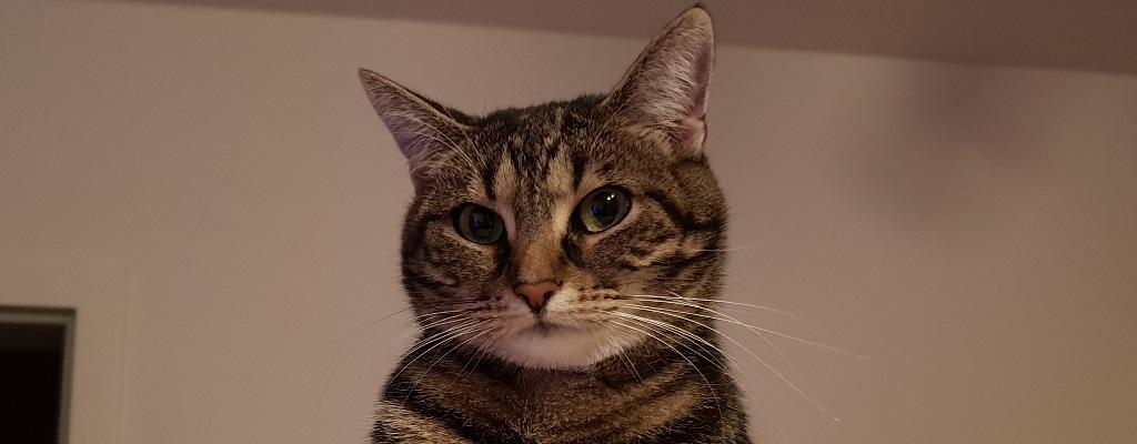 Darum ist diese Katze schlimmer als jeder Raid-Boss!