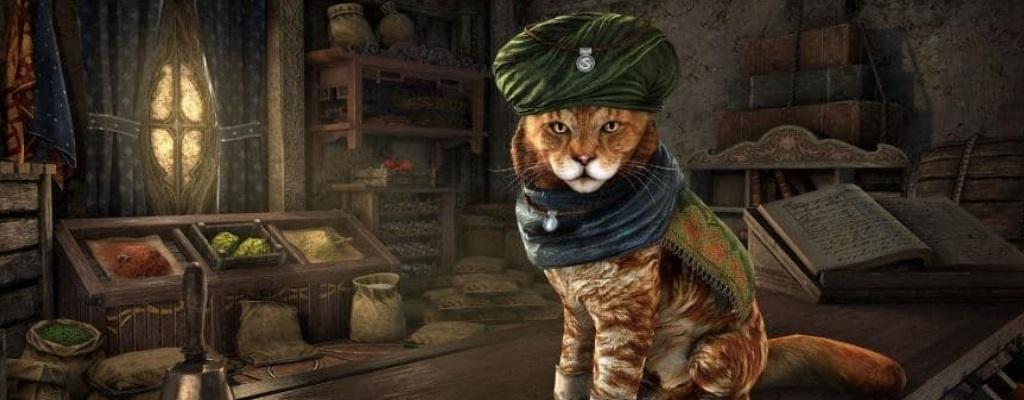 ESO: Entwickler nutzen ihre Katzen schamlos für süße PR-Zwecke