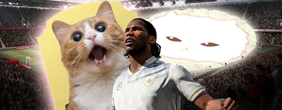 Putzige Kätzchen sind gerade ein Riesenthema in FIFA 20 – aber warum?