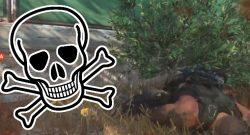 Titelbild Todesbusch