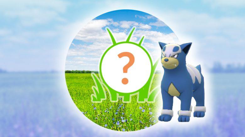 Pokémon GO: Rampenlichtstunde heute mit Hunduster – Sieht riesig aus
