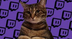 Twitch-Katze-Titel