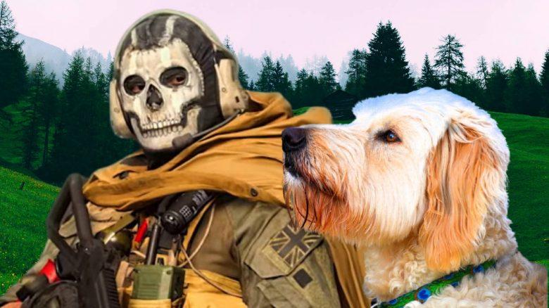 cod warzone hund sammelt kills titel
