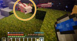 Minecraft Axolotl Titel
