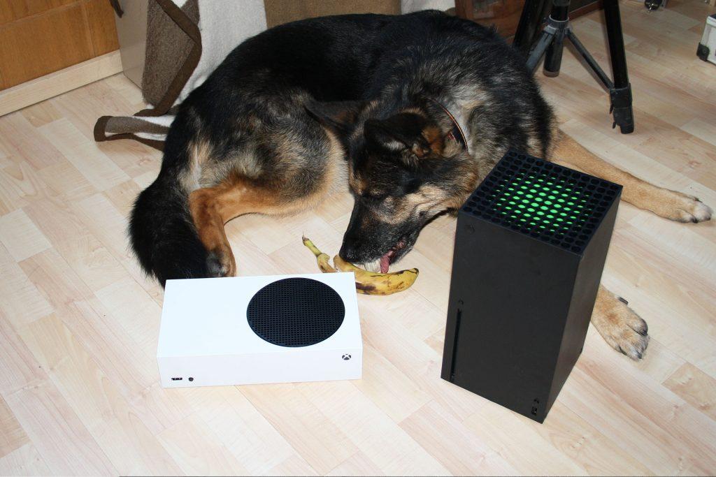 Xbox-Series-X-Series-X-Hund-Banane-Essen