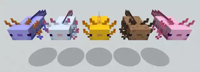 Minecraft Axolotl Color Variants