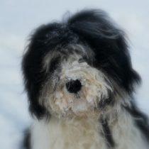 Profilbild von Black Sheep
