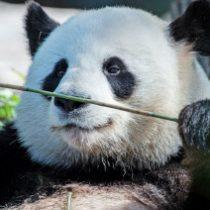 Profilbild von Bambuskadse
