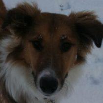 Profilbild von Jokl